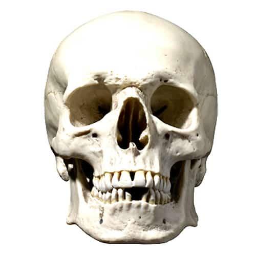 Skull Halloween Cardboard Face Mask Product Image