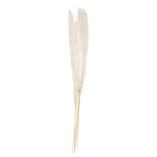 Bleached Pampas Grass - Pack of 5 Product Gallery Image