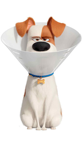 Max The Dog With Cone Collar Secret Life of Pets Star Mini Cardboard Cutout 92cm Product Image