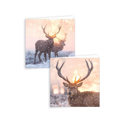 Assorted Photographic Stag Christmas Cards with Envelopes 15cm - Pack of 12