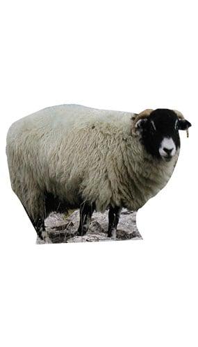 Sheep Lifesize Cardboard Cutout - 84cm Product Image