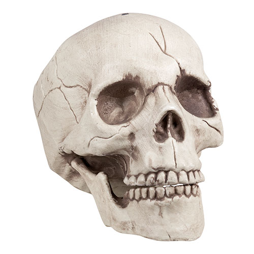 Skull Jawbone with Movable Jaw Halloween Prop Decoration 16cm Product Image