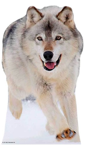 Wolf Lifesize Cardboard Cutout - 90cm Product Image