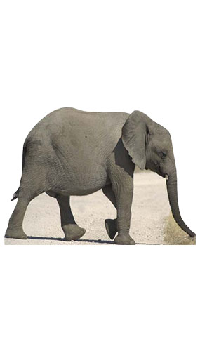 Baby Elephant Lifesize Cardboard Cutout - 114cm Product Gallery Image