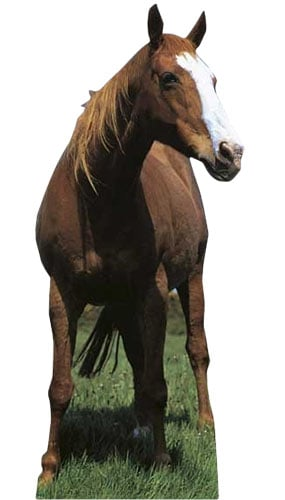 Horse Lifesize Cardboard Cutout - 190cm Product Gallery Image