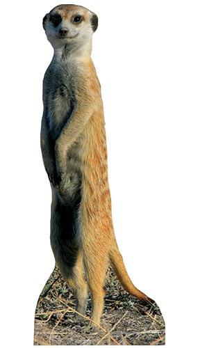 meerkat-98cm-lifesize-cardboard-cutout-product-image