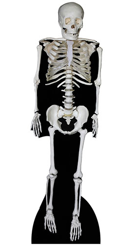 Skeleton Lifesize Cardboard Cutout 183cm - PRE-ORDER Product Gallery Image