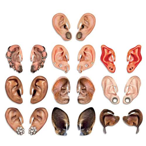 Bugalug Comedy Cardboard Big Ears Photo Props - Pack of 10 Product Gallery Image