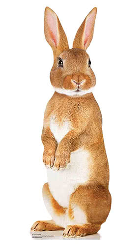 Cute Rabbit Star Mini Cardboard Cutout 90cm Product Gallery Image