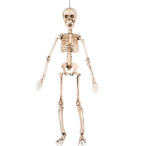 Halloween Prop Movable Skeleton Hanging Decoration 50cm