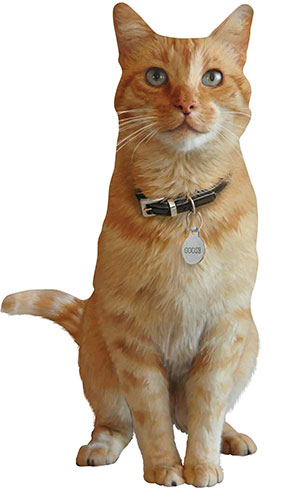 Captain Marvel Goose The Cat Star Mini Cardboard Cutout 40cm Product Gallery Image