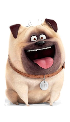 Mel Pug Dog Secret Life of Pets Star Mini Cardboard Cutout 91cm Product Gallery Image