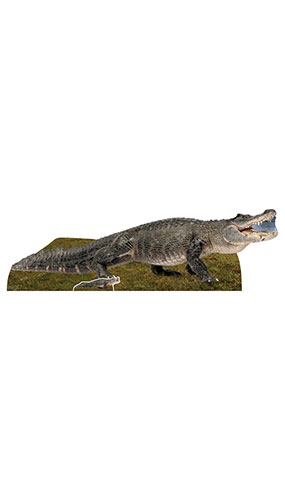 Fresh Water Alligator Lifesize Cardboard Cutout 193cm Product Gallery Image