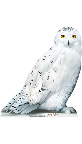 Hedwig Harry Potter Star Mini Cardboard Cutout 74cm Product Gallery Image
