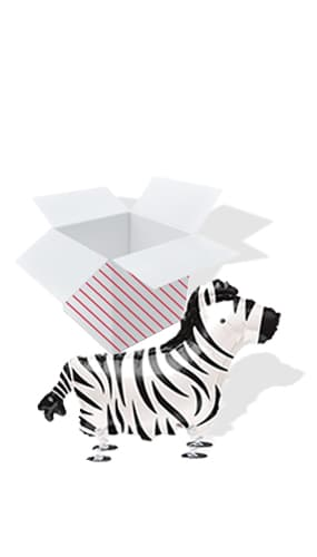 Zebra Walking Pet Foil Helium Balloon - Inflated Balloon in a Box